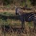 Safari Flickr (186 of 266)