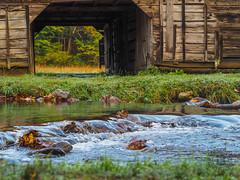 Cataloochee Creek, Great Smoky Mountains National Park, North Carolina (netbros) Tags: greatsmokymountainsnationalpark cataloocheevalley northcarolina cataloocheecreek caldwellbarn elkrut netbros internetbrothers