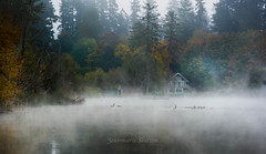 Geese In Fog (jeanmarie's photography) Tags: jeanmarieshelton fog foggy mist autumn fall waterscape animal waterfowl geese cottagelake canadageese light landscape lake nature nikon colors trees water
