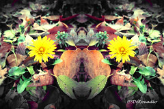 Dandelion & Leaves (Stephenie DeKouadio) Tags: abstractflower abstract abstractart abstractflowers hypnotique artwork art artistic flowers flower flowersabstract flowerabstract leaves autumn yellow colorful dandelion