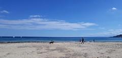 Gioco tra amici - Mondello (PA) (dona(bluesea)) Tags: cane dog amici friends spiaggia beach sabbia sand cielo sky nuvole clouds gioco game mondello palermo sicilia sicily