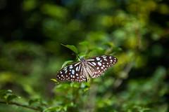 Butterfly (Dooquie) Tags: xindiandistrict newtaipeicity taiwan tw hiking hike outdoor outside taipei taipeitaiwan bitan hemeimountain hemeihikingtrail butterfly