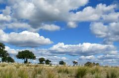 wolkenland (lualba) Tags: clouds wolken himmel sky landschaft landscape nature natur tree baum alentejo portugal