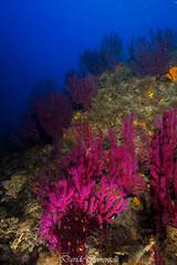 IMG_1313 (davide.clementelli) Tags: diving dive dives padi immersione immersioni ampportofino portofino liguria friends amici underwater underwaterlife sottacqua