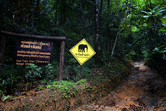 Beware of Wild Elephants (B℮n) Tags: thailand เขาสก khao sok national park jungle oerbos wildlife south wild mammals mountains oldest forest rainforest sandstone limestone mountain 950m monsoon rain erosion asian elephant tiger sambar deer bear guar banteng serow boar pigtailed macaque langur white handed gibbons squirrel muntjak mouse barking boat trip lake klong long cheow lan clouds magic phutawan raft house resort kayaking explore adventure greathornbill twilight dubbelhoornigeneushoornvogel hornbill trail hiking beware elephants khlongseang sanctuary huaithamchan rangerstation pakarangcave