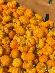 "Fall Harvest- EDWW (EDWW day_dae (esteemedhelga)™) Tags: brushstroke garden nature season flower splants bloom botany nursery parks blossom perennial annual bud cluster floret efflorescence seedling biennial greenery bouquet posy rosette natura mothernature greatmotherdamenature"" vegetation horticulture flora botanical juncture natural beauty creation siring passion sprout esteemedhelga edww daydae digitalpainting paintings art digitalmedia brushstoke artistry"