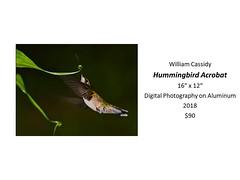 "Hummingbird Acrobat • <a style=""font-size:0.8em;"" href=""https://www.flickr.com/photos/124378531@N04/31490072568/"" target=""_blank"">View on Flickr</a>"