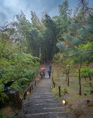 Kōdai-ji Bamboo Grove (Tom Neumann) Tags: sony a6000 ilce6000 samyang 12mm travel trip journey bamboo temple culture religion kōdaiji kodaiji japan kyoto kioto japon nature landscape people forest grove trees flowers rain walk peace light clouds shadows colours color viaje excursion templo cultura naturaleza paisaje gente bosque arboles flores lluvia camino path luz paz sombra