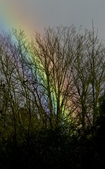 Rainbow (Diane Marshman) Tags: rainbow colors purple blue yellow pink fall pa pennsylvania sky trees