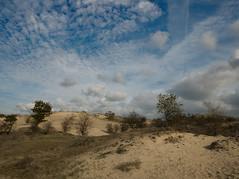 Duinlandschap (ome.henk) Tags: duin dune natuur nature landschap landscape zand sand bomen trees wolken clouds overveen bloemendaalkennemerduinennatuurbomenbosduinenduneslandscapenaturetree