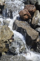falling water (Who am I today?) Tags: cacoastaltrail piratescove