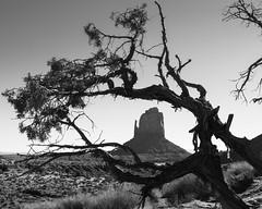 Don's View (Lú_) Tags: monumentvalley utah navajocountry landscape bw blackandwhite monochrome
