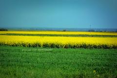 """春の色 (alice 240) Tags: 春の色 landscape """"nikonflickraward"""" nature travel tourism nikon poetry magic dream ngc nationalgeographic poland flickr green greenscene"""