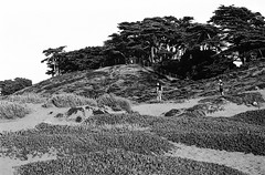 Fort Funston, San Francisco (Postcards from San Francisco) Tags: m6 trix diafine 50mmelmarm film analog sanfrancisco california