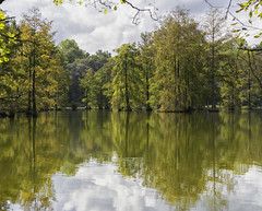 reflections (Deb Felmey) Tags: trappond delaware parks landscape waterscape cypress trees foliage fall colors reflections