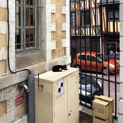 #cat #catstagram #museumcat #museumderouen @rmm_rouen #rouen