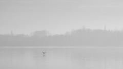 (z e d s p i c s™) Tags: 0512 zedspics keszthely balaton blackwhite magyarország monochrome minimal minimalism 169 hungary hongarije
