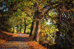 Herbstweg (r.wacknitz) Tags: hdr hahnenklee harz nikond3400 niedersachsen natur nature nikkor trees way autumn fall foliage baum park