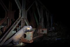 Pine marten (Mike Mckenzie8) Tags: martes wild mammal nocturnal scotland