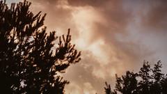 03.09.2018 (Fregoli Cotard) Tags: vanillasky beautifulsunset beautifulclouds magichour magicsky skyporn cloudporn bloodsky vanilla vanillaclouds sunset autumnsunset dailyjournal dailyphotography dailyproject dailyphoto dailyphotograph dailychallenge everyday everydayphoto everydayphotography everydayjournal aphotoeveryday 365everyday 365daily 365 365dailyproject 365dailyphoto 365dailyphotography 365project 365photoproject 365photography 365photos 365photochallenge 365challenge photodiary photojournal photographicaljournal visualjournal visualdiary 246365 246of365