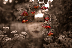 Ribes Rubrum (Fabrice Gillet) Tags: redcurrant visage pareidolia drawing meditation summer sepia red portrait impermanence berries fruit