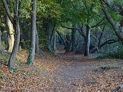Not as bucolic as it seems (Phil Gayton) Tags: path track trail tree foliage leaf fall autumn riverside walk totnes devon uk