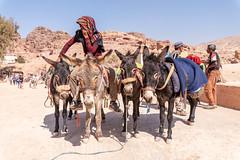 Donkeys for hire in Petra (George Pachantouris) Tags: jordan hasemite petra aqaba amman middle east travel tourism holiday warm ancient nabateans treasury roman indiana jones arab arabic