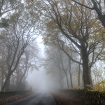 A foggy morning. thumbnail