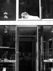 Square dog (L.Fevre _ photos bizarres_) Tags: sreet funny shop dog dogshop
