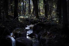 Late afternoon light (loewx017) Tags: nature creek water light flickr trees forest woods minnesota dark sunset rocks flow