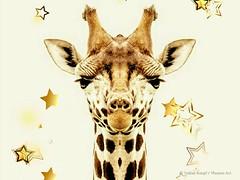 Giraffen Invasion / Photo by Pixoom Art, © Tobias Knopf, 2018 #Pixoom #Art #TobiasKnopf #Photography #Photo #Animals #Giraffe (spreefire) Tags: photo giraffe animals art pixoom tobiasknopf photography