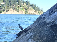 Boids (hamaddeshmukh) Tags: water ocean lake bird rock mountain nature river tree outdoors sea animal outdoor terrain cormorant landscape cliff waterfowl travel waterresources ardeidae noperson standing heron seashore