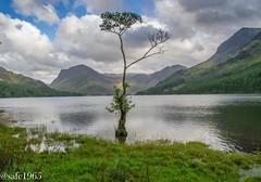 Buttermere, Lake District (safc1965) Tags: buttermere lake landscape lakes lakedistrict national nationaltrust cumbria photography scenery