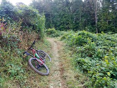 Post-Trimming Ride (mcfeelion) Tags: cycling bike bicycle mtb wakefieldpark annandaleva