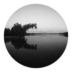 Brontosaurus at Dusk (Sean Anderson Media) Tags: vignette blackandwhite sonya7sii tree reflection lake dusk lomographymicro43experimentalfisheyelens lomography experimentalfisheyelens fisheyelens fisheye landscape grain dinosaur brontosaurus treeshape fotodiox