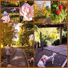 Walk in Sir Thomas & Lady Dixon Park with Nana & the dogs (Lisangel) Tags: montage sirthomasandladydixonpark rose rosehip dog walk ulster northernireland