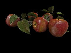IMAGE RECOGNITION PROJECT APPLES and BRANCH (Rhonda Melo MMR GALLERY Melor) Tags: firestorm secondlife secondlife:region=danishvisions secondlife:parcel=danishvisionssandbox secondlife:x=100 secondlife:y=107 secondlife:z=500 image recognition project apples branch