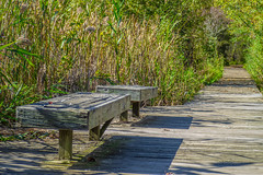 Seats on the Path (Greg Jarman) Tags: boardwalk seats olympus 40150 omd em1 micro four thirds m43