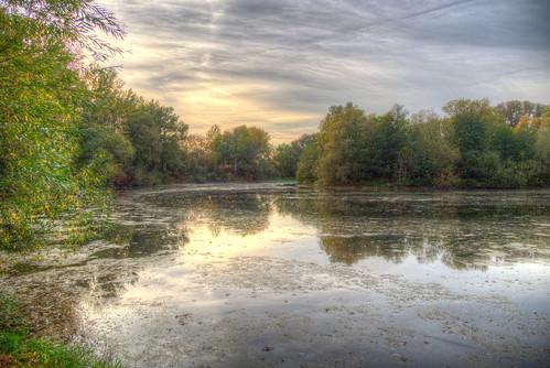 Swan lake in Autumn mood
