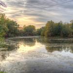 Swan lake in Autumn mood thumbnail