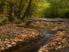 Autumn in Goreglen (Simon Wootton) Tags: woods autumn autumncolours water trees leaves browns yellows gorebridge midlothian scotland
