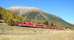 RhB Ge4/4ii locomotive_RE 1335_Samedan, Switzerland_161016_01 (DS 90008) Tags: rhb ge44ii re1335 mountain autumn train lok samedan hills narrowgauge metregauge nature