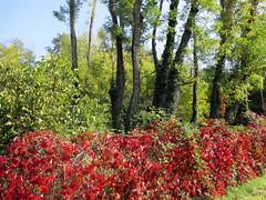Voici l'automne (Eli.b.) Tags: autunno fall automne foglie ciel sky rosso colori natura couleur otono feuilles leaves alberi cielo arbres red rouge vert verde