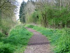 Black_Dog_Woods,_Dilton_Marsh_-_geograph.org.uk_-_1284697 (tanyapavlicapschyrembel) Tags:
