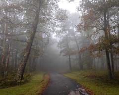 Skyline Drive, VA 9-21-2018 (adamwilliams4405) Tags: virginia visitvirginia va loveva mountains summer landscapes canon nature getoutside explore outside outdoors goexplore tones mood moody fog trees