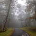 Skyline Drive, VA 9-21-2018 (adamwilliams4405) Tags: virginia visitvirginia va loveva mountains summer landscapes canon nature getoutside explore outside outdoors goexplore tones mood moody fog trees