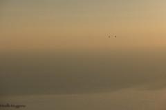 vol (Mireille Muggianu) Tags: aves birds bouchesdurhone cassis europe france oiseaux provencealpescotedazur ciel coucherdesoleil minimal paysage samsungnx nx500