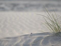 bork18s-092 (Mark Koennecke) Tags: 2018 borkum flickr haiku sand sommer