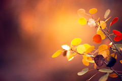 An Autumn Dream (miss.interpretations) Tags: autumn autumnal fall seasons colors plum wine blush merlot gold orange yellow burntorange canary palette colorscheme fallscheme autumncolors leaves aspens aspen trees coloradofall colorado eagleco amazing canon canon6dmarkii 85mm bokeh bokehlicious dreamy rachelbrokawphotography missinterpretations