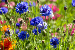 Summer (artframework) Tags: summer herbs flowers outdoors garden